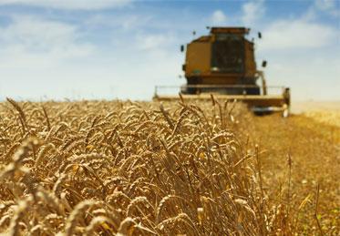 farm-crop-insurance